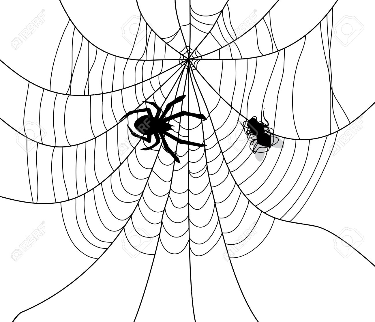 Vector Illustration Of Spider, Web And A Caught Fly Royalty Free.