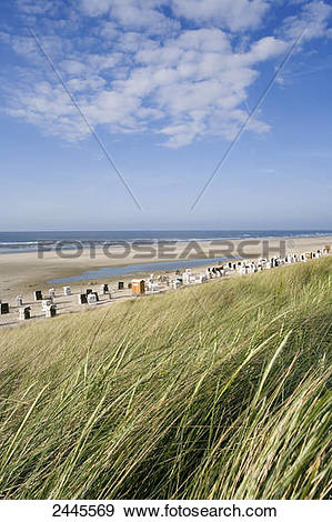 Stock Photograph of Tall grasses swaying in wind on beach.