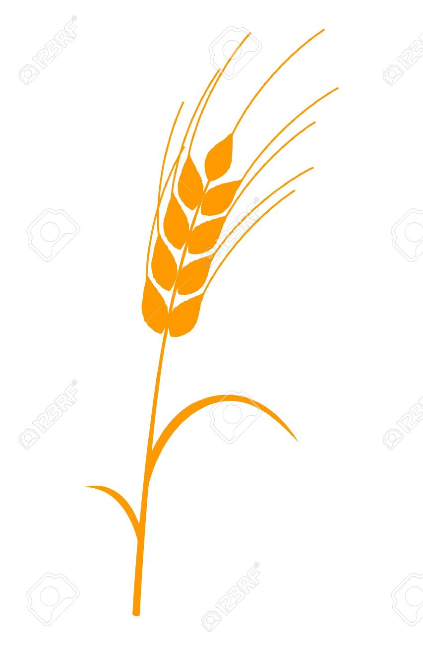 Ear Of Corn Golden Stem And Leaves Royalty Free Cliparts, Vectors.