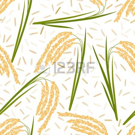108 Wild Rice Stock Vector Illustration And Royalty Free Wild Rice.