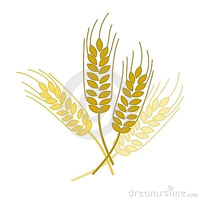 Wheat Spike Stock Images.