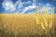 Barley Spike Field Stock Illustrations, Vectors, & Clipart.