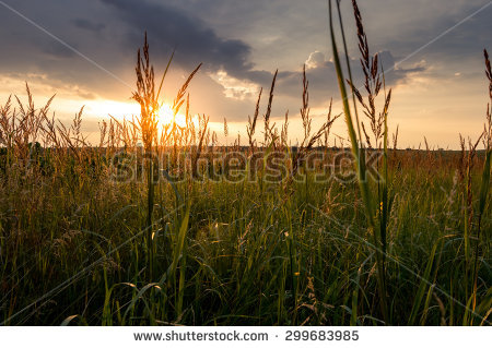 Field Gras Stock Photos, Images, & Pictures.