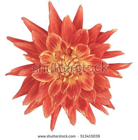 Spiky Flowers Stock Photos, Royalty.