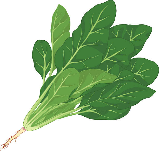 Spinach Clip Art, Vector Images & Illustrations.