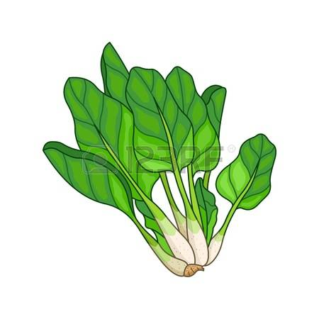 3,254 Spinach Cliparts, Stock Vector And Royalty Free Spinach.