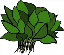 Spinach Clipart Free.