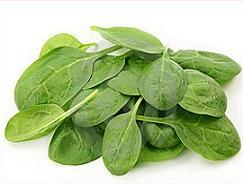Free spinach Clipart.