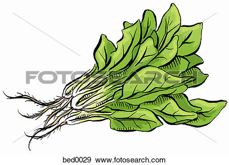 Spinach Clip Art and Stock Illustrations. 128 spinach EPS.