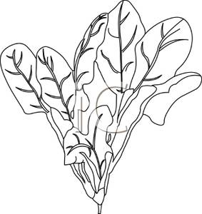 Spinach clipart black and white 2 » Clipart Station.