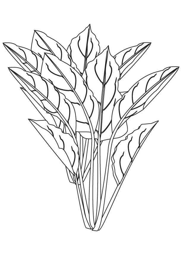 Spinach flowering plant coloring page.