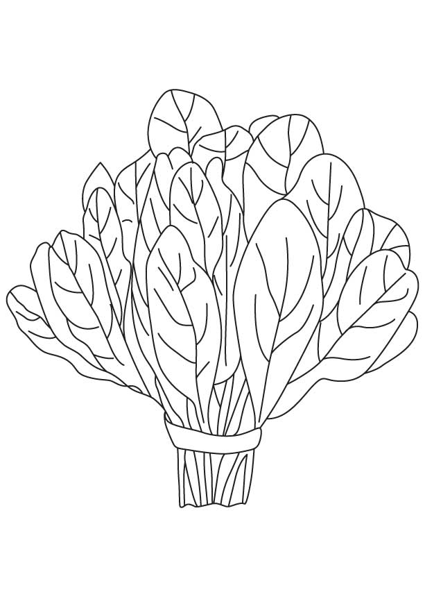 Spinach clipart black and white 5 » Clipart Station.