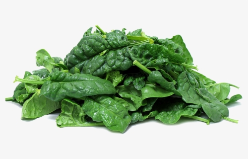Free Spinach Clip Art with No Background.