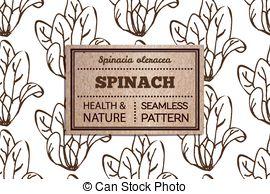 Spinacia oleracea Clipart Vector Graphics. 7 Spinacia oleracea EPS.