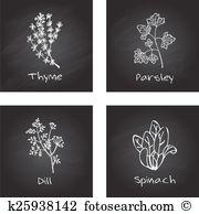 Spinacia oleracea Clip Art and Illustration. 7 spinacia oleracea.