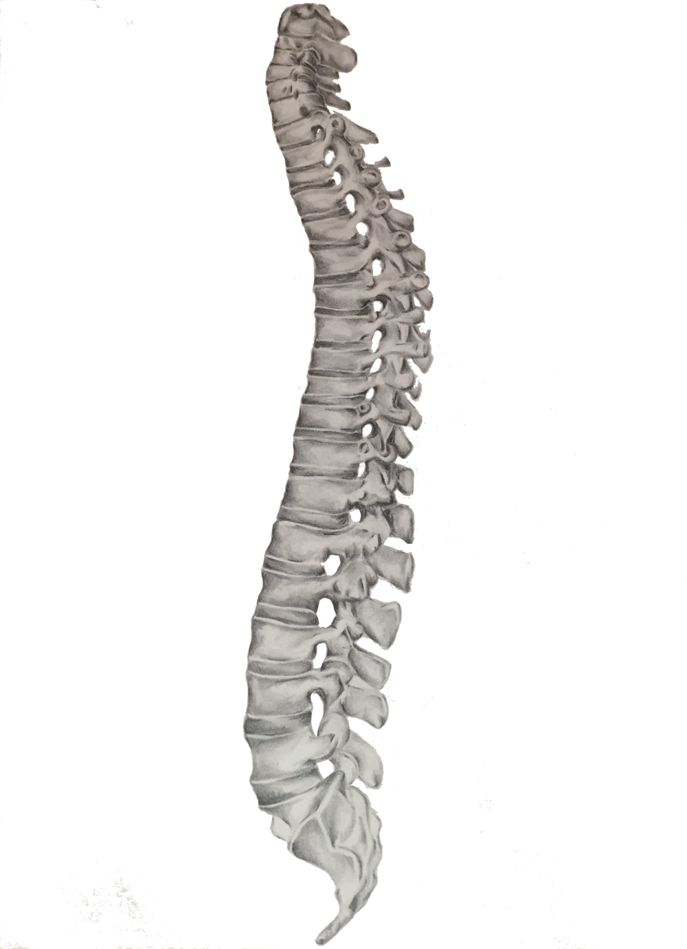 Spine Png (105+ images in Collection) Page 2.