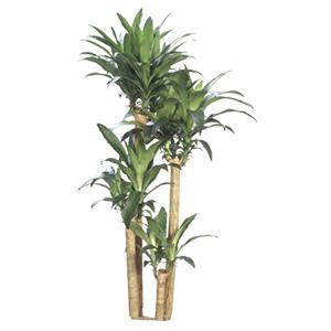 Plant Design.