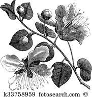 Spinosa Clipart and Illustration. 12 spinosa clip art vector EPS.
