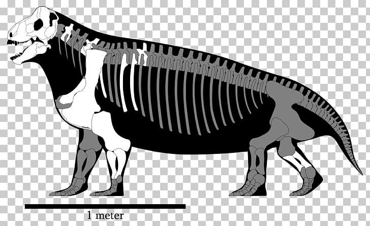 Spinosaurus Tyrannosaurus Megalosaurus Ceratosaurus.