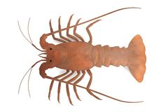 Florida's Spiny Lobster Stock Illustrations.