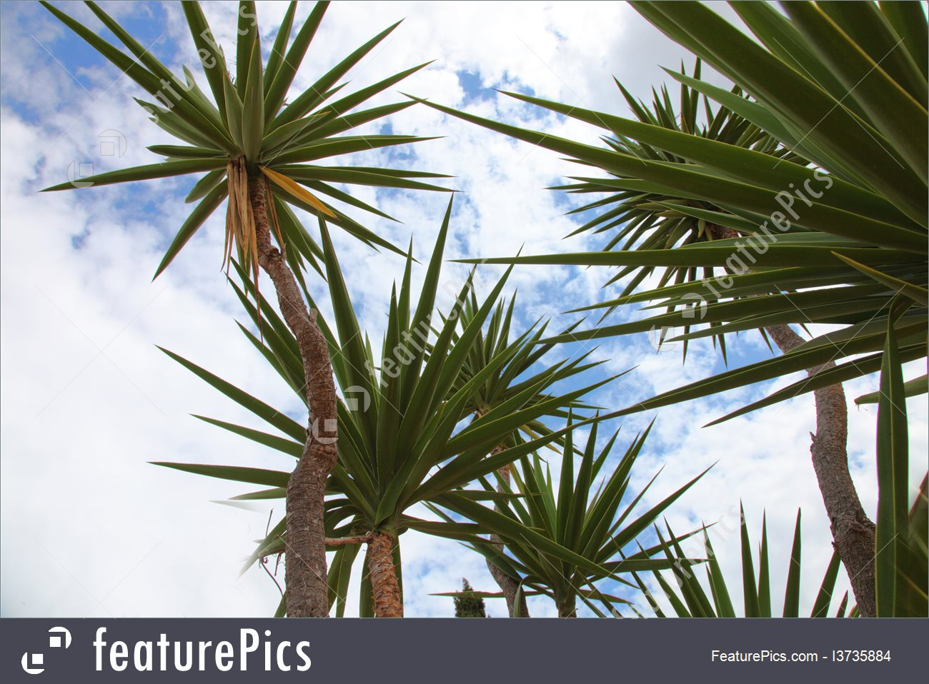 Tropical Palm Trees Image.