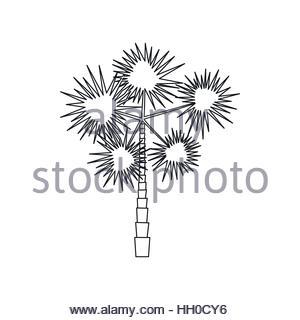 Spiny Palm Tree Stock Photo, Royalty Free Image: 80543744.
