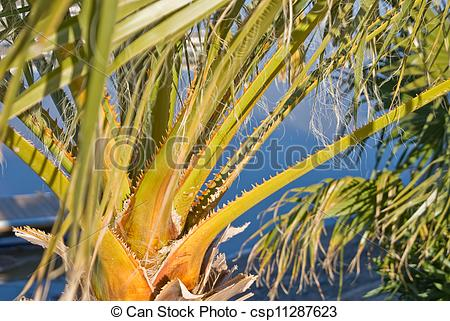 Stock Photo of Spiny palm fronds.