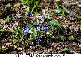 Spiraeoideae Images and Stock Photos. 21 spiraeoideae photography.