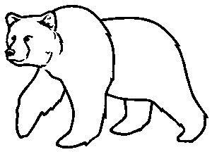 Black Bear Drawing.