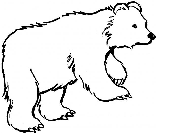 Bear clipart spirit bear, Picture #88934 bear clipart spirit.