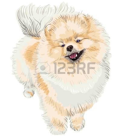 73 Pomeranian Spitz Cliparts, Stock Vector And Royalty Free.