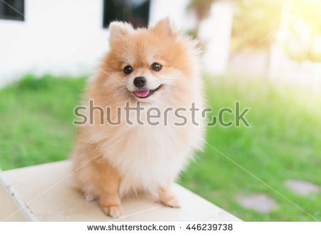 Canines Stock Photos, Royalty.