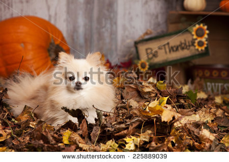 "fall Decor"" Stock Photos, Royalty."