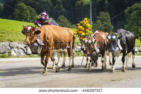 Fribourg Stock Photos, Royalty.