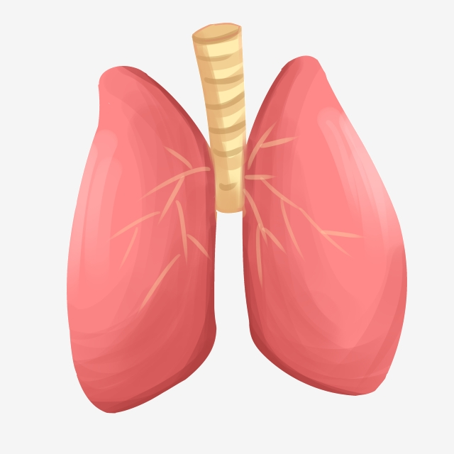 Heart Liver Lung Spleen And Kidney Organs, Liver, Heart.