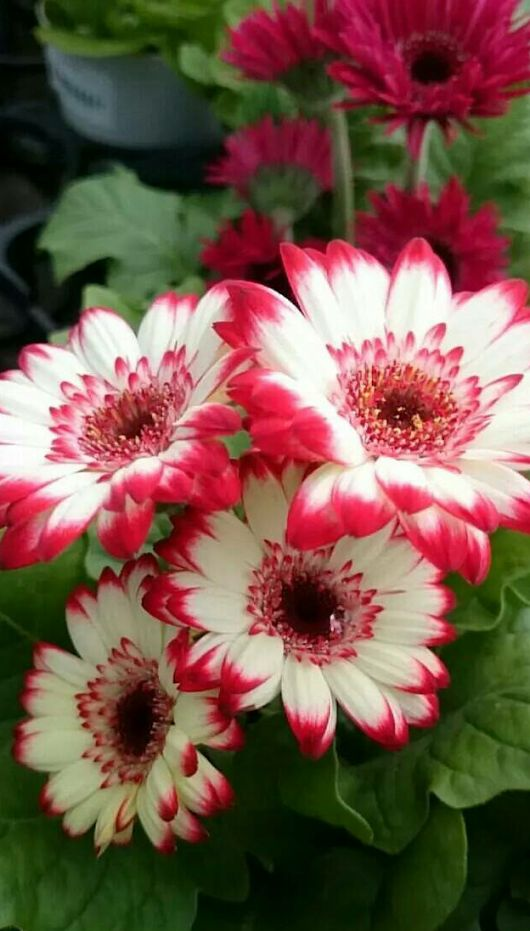 """1000+ images about """"BREATH TAKING FLOWERS"""" on Pinterest."""
