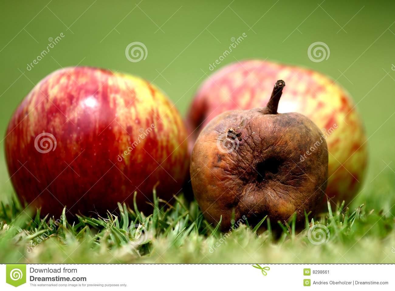 Spoil apple clipart.