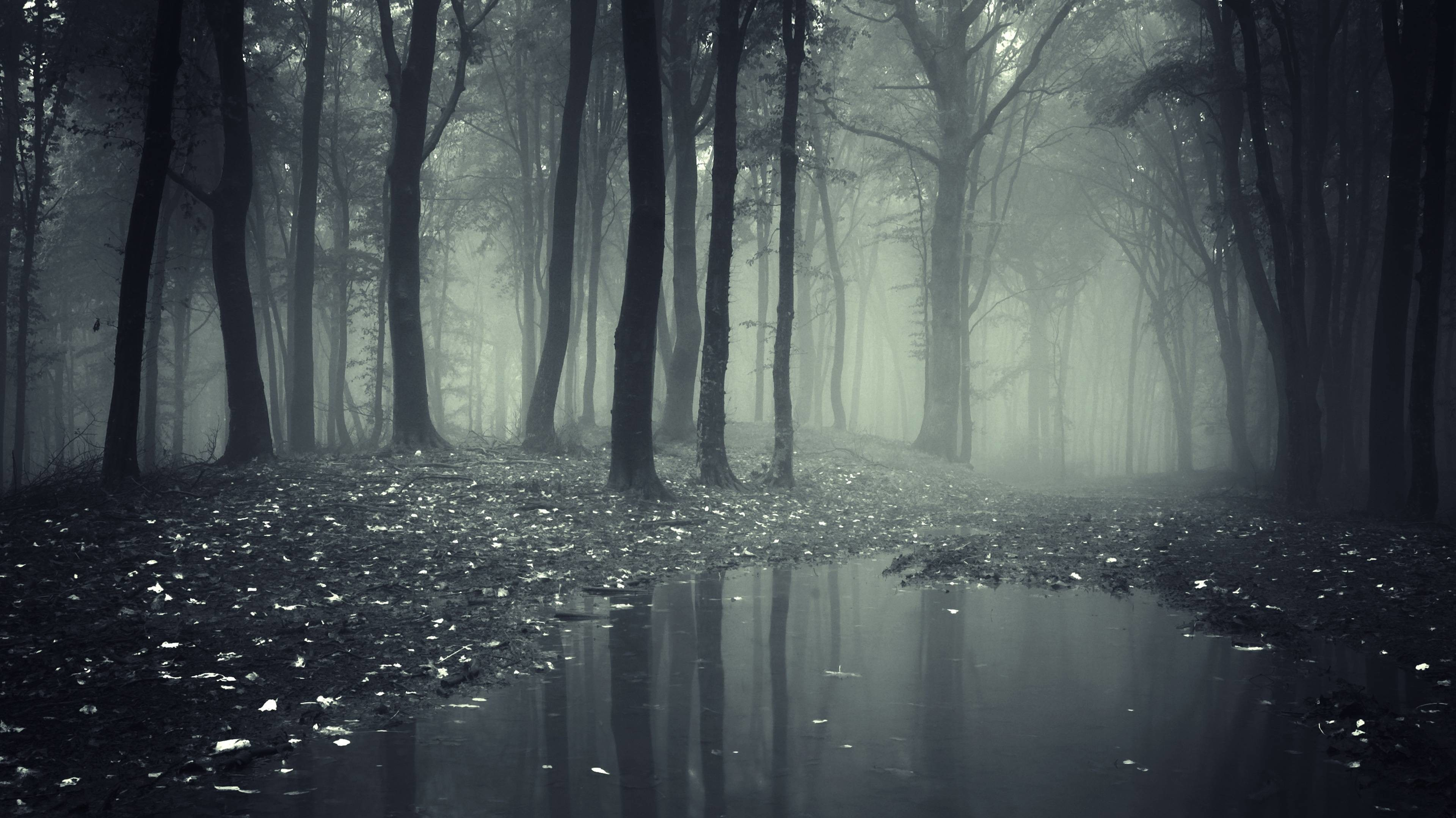 Spooky Forest Wallpaper (68+ images).