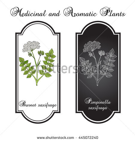 Pimpinella Stock Photos, Royalty.