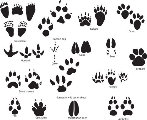Paw Print Tattoos That Show the Love for Your Furry Friends.