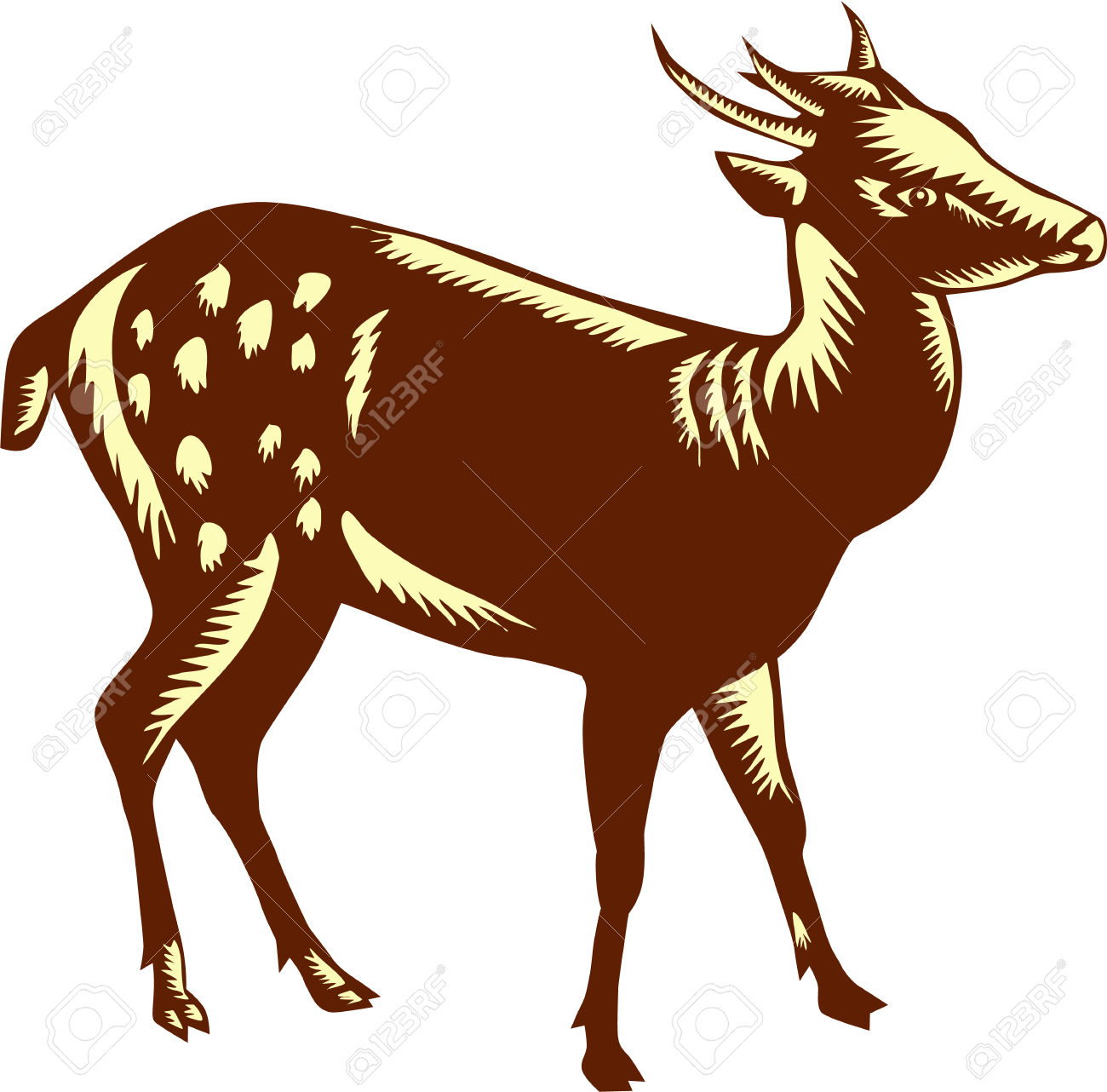 Illustration Of The Visayan Spotted Deer (Rusa Alfredi), Also.