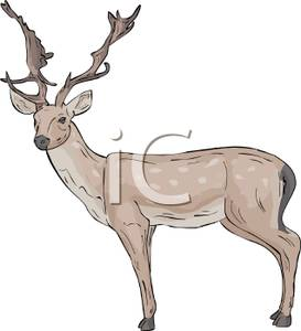 Antlers on a Spotted Deer.