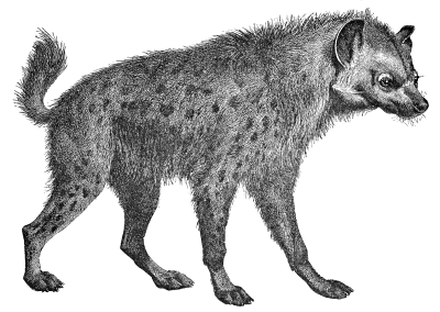 Free Hyena Clipart, 1 page of Public Domain Clip Art.
