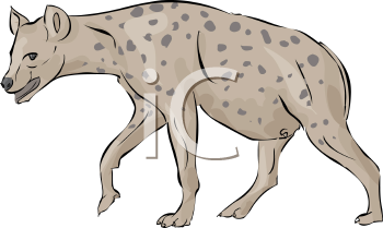 Spotted Hyena.