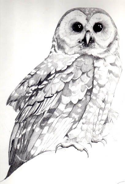 Pin by Salina Chu on Owls.