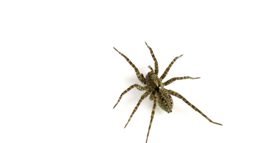 Spider Stock Footage Video.