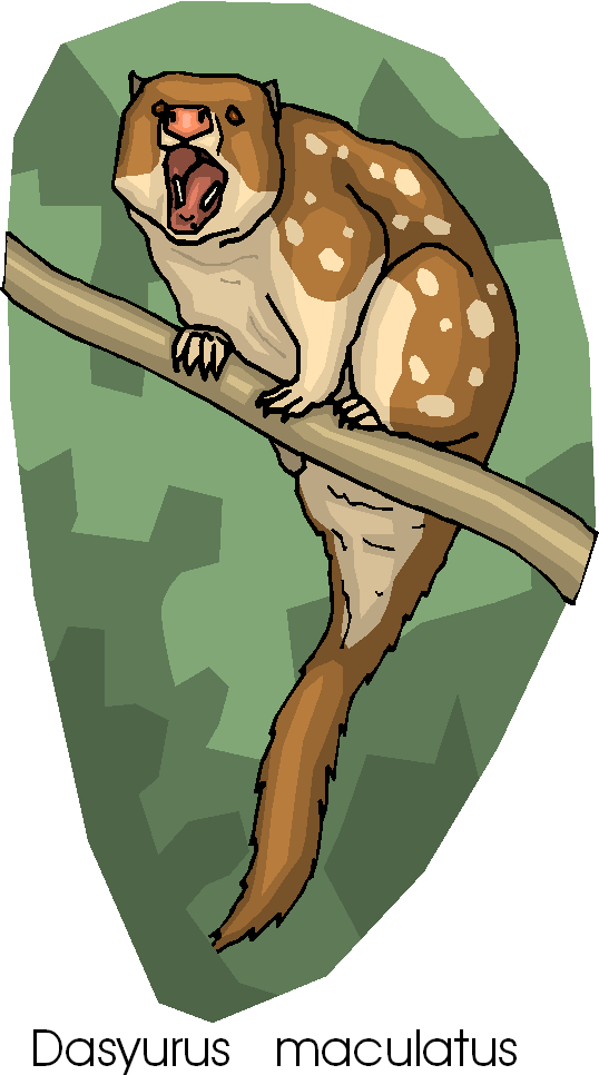 Spotted tail clipart #4