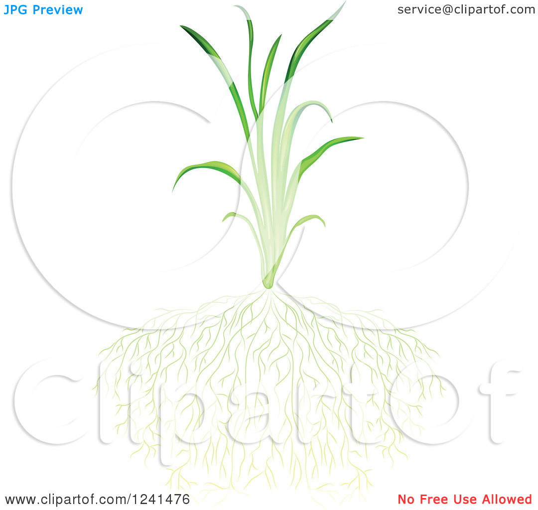 Clipart of a Green Grassy Plant and Sprawling Roots.