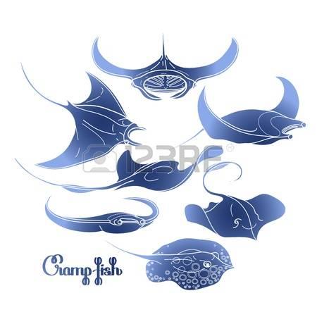 303 Manta Ray Stock Vector Illustration And Royalty Free Manta Ray.