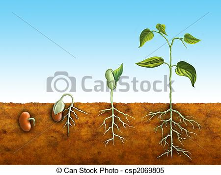 Germination Stock Photo Images. 7,449 Germination royalty free.